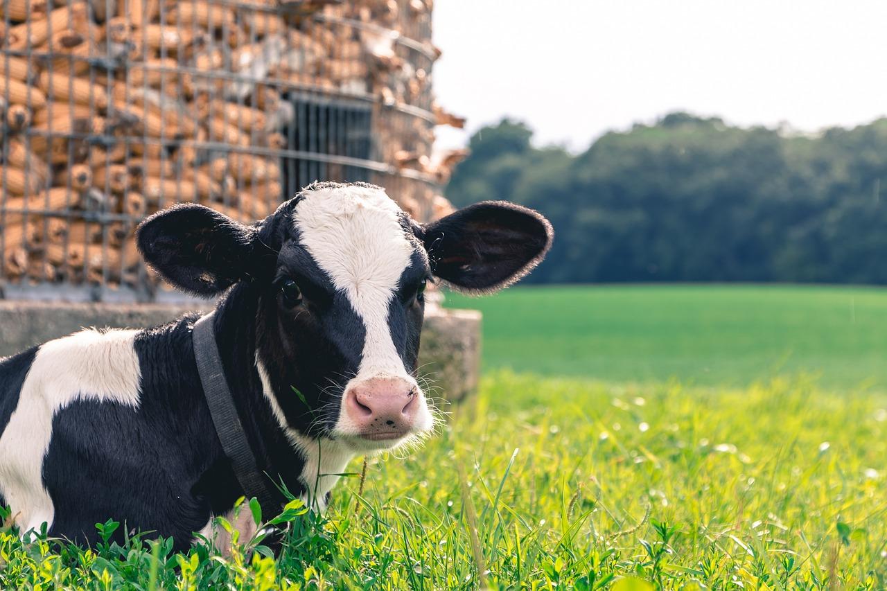 牧場の乳製品